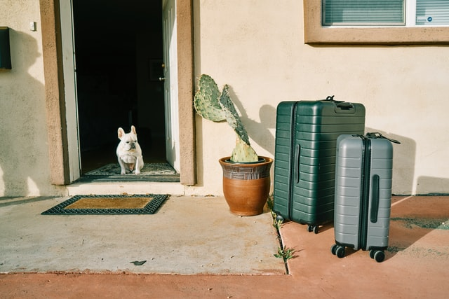 travelling abroad with your dog - small white dog in doorway looking at luggage